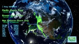 Markerboard Jungle Frogs screenshot - Space frog